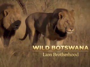 The Cute Ones on Animal Planet - Sri Lanka Telecom PEOTV
